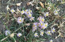 秋天草地的小草花