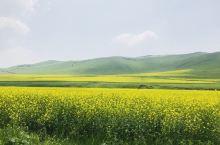 """柔风渡绿开花雨,瘦叶花扬到夏天。沿着""""京北第一天路""""走不远就是千松坝森林公园、七彩森林公园,7月的坝"""
