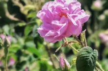 花朵很漂亮!