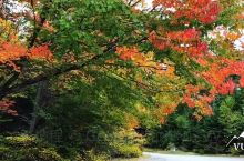 有一种美,叫秋天的加拿大!人间仙境也不过如此~ 魁北克的Mont-Tremblant 法语区的秋日晴