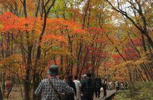 沈阳本溪关门山,红叶遍地满山尽显秋色,10月中值得去赏枫之处