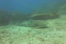呆萌的大鲨魚