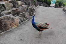 伊豆动物园,动物都是散养的,全是近距离接触
