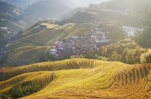 金秋#收获的季节,广西龙脊梯田等待您的到来!