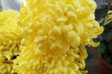 不是花中偏爱菊, 此花开尽更无花。  快来,快来,快来赏花吧!
