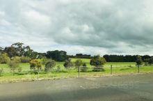 澳洲的春天,油菜花,草原,云,田园风光。