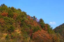 宝鸡西山六川河沿途的红叶美不胜收,十天后再去应该最美。