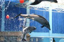 蓬莱海洋 极地 世界:幽默滑稽的 海豚海狮 表演,让你感受海 洋动物的 智慧与 纯情;热带 雨林馆,