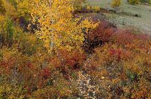 中秋的乌兰布统 两天内经历雨雪雾雹和晴天 这里没有最美的季节 什么时候都有它别致的美!春夏秋冬 风雨