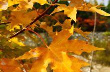 爱在深秋 | 最美的风景在路上,这里泉水清澈,红叶漫坡,层林尽染,自有独特韵味,长长的步道,更契合了