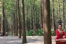 林中古筝声,别有一番滋味在心头。