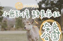 #日本必逛公园 小鹿乱撞 静美疯狂的奈良公园#  景点名称: 奈良公园  详细地址: 雑司町469