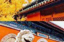 北京赏秋好地方 百年银杏大觉禅寺