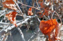 《不一样的秋色》 秋 在  收获与凄凉中踱步…… 在  近与远中纠结…… 在   去向何方中迷茫!