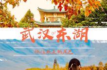 来东湖:抓住武汉秋色最后的尾巴 大概是秋色太美,遍地金装的华丽太让人赏心悦目,尽管岁时已过立冬多时,