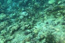 我喜欢巴里卡萨,海水跟名字一样的浪漫。 我喜欢巴里卡萨岛民的纯朴温厚和不善言辞,一声憨笑让人暖暖的,