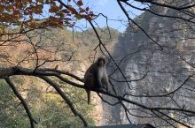 庐山上的猕猴