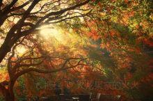 莫干山赏秋进行时/美美哒的旅程  金黄稻田 龙里(劳岭村往五四村的路上)  10月初~11月初 这里