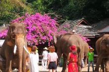 西双版纳大象谷