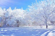 林海雪原~延边和龙老龄/老里克湖冬韵