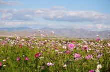 新疆可可苏里湖,位于富蕴县境内,湖水碧蓝澄明,由周边高山积雪融水汇集而成,是一处天然的沼泽湿地。