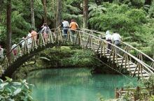 台湾南投的溪头风景区是一个实验森林区,里面种植了杉,柏,桧,银杏等等的多种树木,适合赏木的朋友前来欣