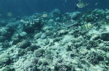 网红潜水圣地!从邦劳过去要快2个小时了,浪大的颠的不行~感觉那里的水不是很干净,可能是浪大的原因吧,