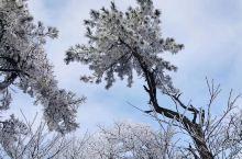 今日份莫干山也太美了吧  都说莫干山的最美季节是秋季,而我觉得冬季也毫不逊色呢 秋季有枫叶冬季赏雾凇