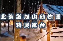 【梦幻中的北海道旭山动物园】  (图钉)(图钉)(图钉)日本人气最旺的动物园  (亲亲)(亲亲)(亲