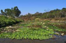 阳春高流河经过治理和改造后的高流河两岸视野开阔、干净整洁,新修建的亲水平台以及休闲小道给人耳目一新的