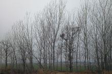 雾霾中的乡村 最近雾霾严重 开始怀念碧海蓝天白云下的厦门市湖里区 期待回归 讨厌的传染病 赶快过去吧