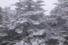 这树真漂亮