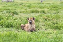 转自白:希望你们能看到非洲动物世界的美丽与忧伤。          又刺激又兴奋又愤怒又伤心的一天。