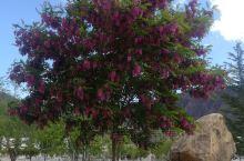 好漂亮的树