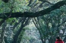 《来自盈江的诱惑:我真的想要去旅游……》  我是孤独浪子,希望我的拍拍让您有所收获。 漫游神州31载