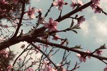 春暖花开!生机勃勃新生!!! 隆昌·内江