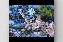 春天在哪里呀春天在哪里?春天在那华州的少华山里。