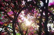 《来自乾县的诱惑:我真的想要去旅游……》  我是孤独浪子,希望我的拍拍让您有所收获。 漫游神州31载