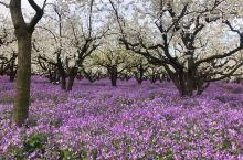 草长莺飞,烟花三月,美丽三台山,美丽宿迁!