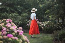 今年份的绣球花季已经开始啦,本来去辰山植物园拍月季的,去了才发现月季和蔷薇很多都已经凋谢了。原本以为