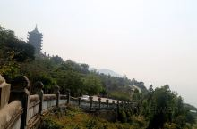 山茶半岛,位于岘港市东北区,平均海拔六百九十三米,这里保存了辽阔的原生森林与珍稀的各类禽兽,