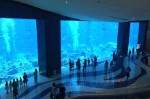 引进的海水上万条的鱼,让人眼花缭乱。