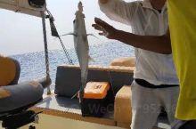 第一次沙特阿拉伯公海垂钓