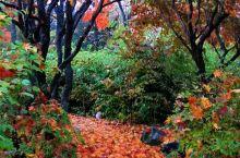 十胜川温泉  清晨,早餐后,十勝川温泉,深秋雨后,散步!