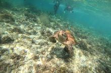 巴里卡萨岛,因为四周深达3000米深的海底断崖而闻名,也因此孕育了大片的珊瑚墙,是海龟、热带鱼群等海