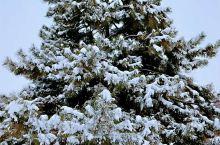 我慢慢的听雪落下的声音。