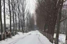 情人节,这雪下出了大东北的感觉