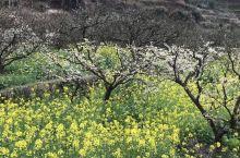 韶关乐昌九峰镇三月桃花盛开的季节好漂亮。