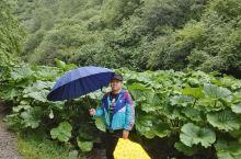 泾源野荷谷:         野荷谷位于泾源县城西北5千米处,是泾河的另外一个源头,峡长15千米,又