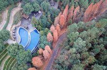 浙江莫干山的裸心谷度假村,独占了一大片山谷,面积超大,环境超级赞,去住的时候正值秋色斑斓时,美的一塌